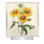 Galardia Shower Curtain
