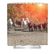 Galloping In Camargue Shower Curtain