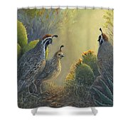 Gambel's Quail - Early Light Shower Curtain