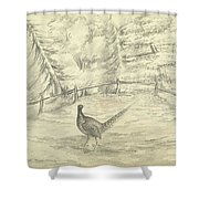 Game Bird By W  Buelow Gould  C 1835  Shower Curtain