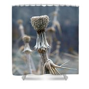 Game Of Thorns 4 Shower Curtain