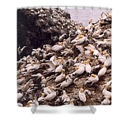 Gannet Cliffs Shower Curtain