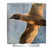 Gannet In Flight 2 Shower Curtain