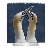 Gannets In Love Shower Curtain