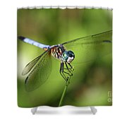 Garden Dragonfly Shower Curtain