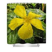 Garden Flower In Kwajalein Shower Curtain