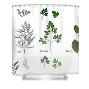 Garden Herbs Shower Curtain