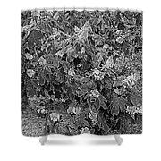 Garden Hydrangeas In Grayscale Shower Curtain