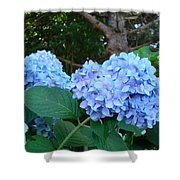 Garden Landscape Blue Hydrangeas Art Print Baslee Troutman Shower Curtain