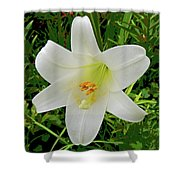Garden Lily Posterized Background Shower Curtain