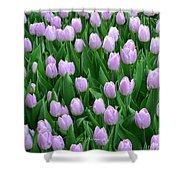 Garden Of Pink Tulips Shower Curtain