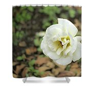 Garden Party Hybrid Tea Rose, White Rose Originally Produced By Shower Curtain