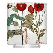 Garden Poppy Shower Curtain