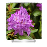 Garden Rhodoendron Plant Shower Curtain