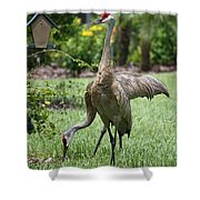 Garden Sandhills Shower Curtain