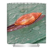 Garden Snail 4 Shower Curtain