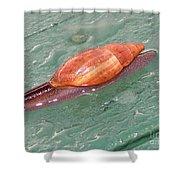 Garden Snail 4 Shower Curtain