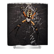 Garden Spider And Web Shower Curtain by Tamyra Ayles