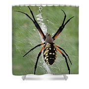 Garden Spider Shower Curtain