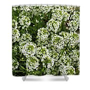 Garden Surprise 2 Shower Curtain