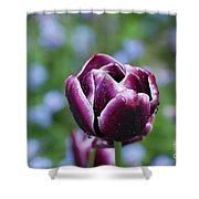 Garden Tulip With Rain Drops On A Spring Day Shower Curtain