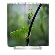 Garden Vine Shower Curtain