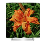 Garden With A Blooming Double Daylily Flowering Shower Curtain