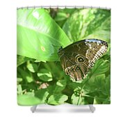 Garden With A Blue Morpho Butterfly With Wings Closed Shower Curtain