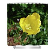 Garden With Beautiful Flowering Yellow Tulip In Bloom Shower Curtain