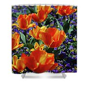 Garden With Blooming Yellow And Red Tulip Blossoms Shower Curtain