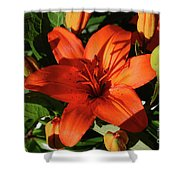 Garden With Lily Buds And A Blooming Orange Lily Shower Curtain