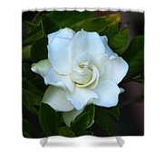 Gardenia 5 Shower Curtain