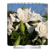 Gardenia Flowers Shower Curtain