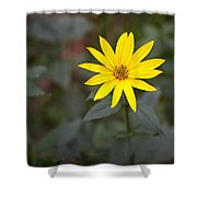 Gardening Melody Shower Curtain