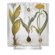 Garlic, 1613 Shower Curtain