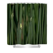 Garlic Chive Season Shower Curtain