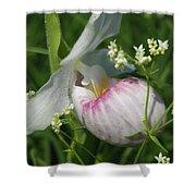 Garnished Showy Lady Slipper Shower Curtain