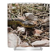 Garter Snake On The Trail In The Pike National Forest Of Colorad Shower Curtain