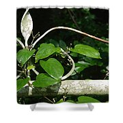 Gate And Vine Shower Curtain