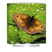 Gatekeeper Butterfly After The Rain. Shower Curtain