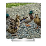 Gathering Of The Flock Shower Curtain