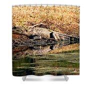 Gator 5 Shower Curtain