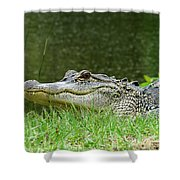 Gator 65 Shower Curtain