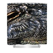 Gator Eye Shower Curtain