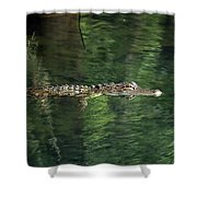 Gator In The Spring Shower Curtain