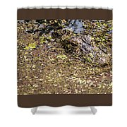 Gator In The Weeds Shower Curtain