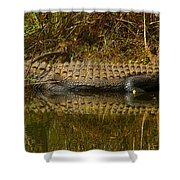 Gator Relection Shower Curtain