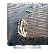Gator Tail Shower Curtain