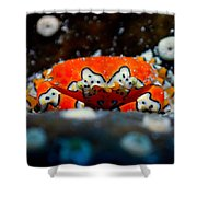 Gaudy Clown Crab Pose Shower Curtain