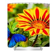Gazania And Blue Butterfly Shower Curtain